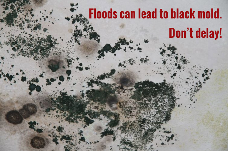 Floods can lead to black mold